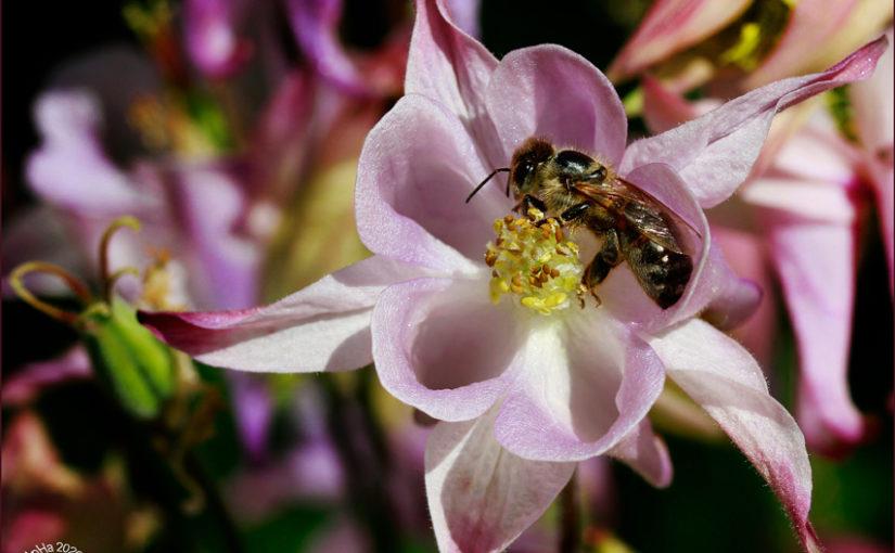 Monatsthema Mai: Blumen